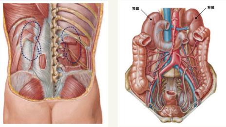 ... 科 腹腔 鏡 手術 a 腹腔 鏡 下